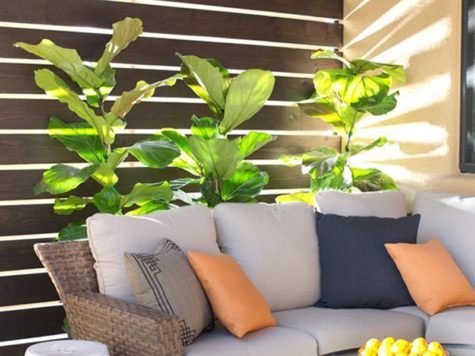 outdoor-privacy-screen